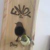 Wijn vogel huisje